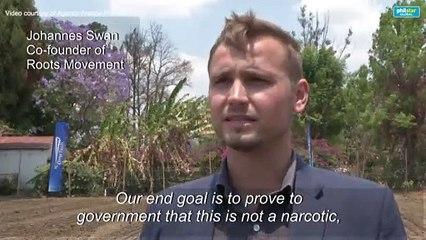 First industrial hemp crop planted in Zimbabwe