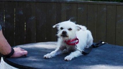 Lucky Dog - Bonded Training
