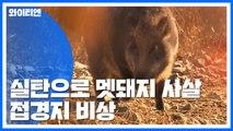 [Y가간다] 저격수 실탄 쏴서 멧돼지 사살...접경지는 지금 / YTN