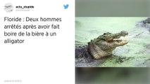 Deux hommes arrêtés pour avoir fait boire de la bière à un alligator