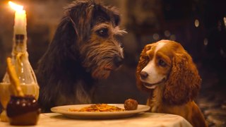 Lady and the Tramp on Disney+ - Official Trailer 2