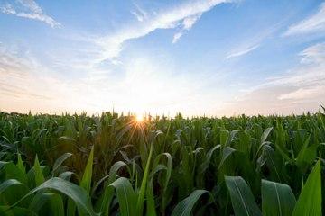 Klimatarier: die neue ökologisch verantwortliche Ernährungsweise
