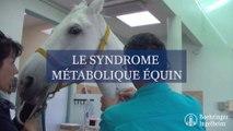 Le syndrome métabolique équin (SME)