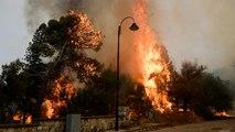 الحرائق تلتهم غابات واسعة بلبنان والحكومة تطلب عونا دوليا