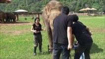 Cet éléphant aime bien les caméras et vient faire le beau en pleine interview