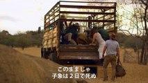 映画『ホリデイ・イン・ザ・ワイルド』