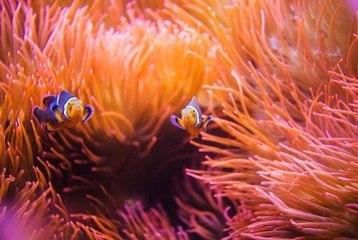 Alles über Seeanemonen