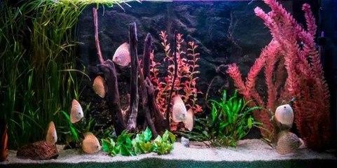 Die verschiedenen Aquarienarten