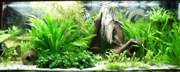 Wie erstellt man ein tropisches Aquarium?