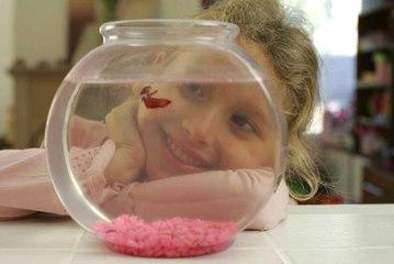 Wie erstellt man ein Süßwasseraquarium?