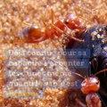 Voici la fourmi la plus rapide du monde