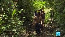 Amazonie et Caraïbes au cœur du FIFAC en Guyane