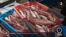 Brexit : les pêcheurs français sont inquiets