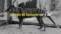 Le tigre de Tasmanie est-il de retour ?