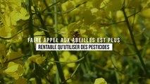 Faire appel aux abeilles est plus rentable qu'utiliser des pesticides