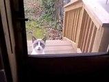 Un chat qui veut rentrer