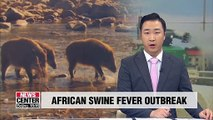 S. Korea confirms African swine fever in two more wild boars
