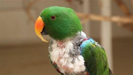 Diese Vogel-Geschichte geht ans Herz