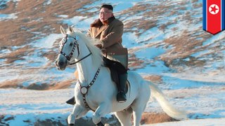 Kim Jong-un forces horse to take his big butt up sacred mountain
