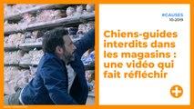 Chiens-guides interdits dans les magasins : une vidéo qui fait réfléchir