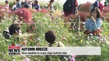 Seoul Silver Grass Festival is perfect way to spend cool autumn day