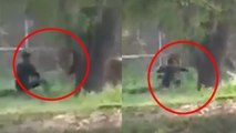 Man Vs  Lion In Delhi Zoo Warning Do not Do this Ever you will not survive