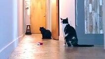 Esto es lo que hace tu gato cuando te vas de casa y cree que nadie lo ve