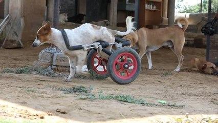 Rührend: Hier finden kranke Hunde ein neues Zuhause