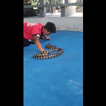 Fearless snake catcher in Thailand picks up reptiles in his mouth by biting their head