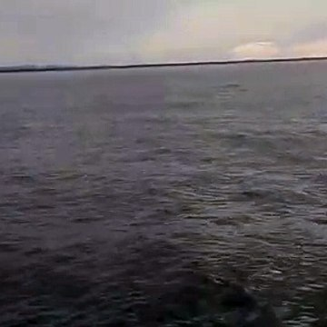 The terrifying and impressive jump of a whale