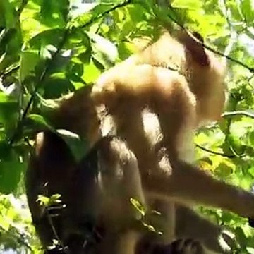 Amazing Boys Rescue Monkey From Python Hunting   Real Python Attack Monkey   Craziest Animal Fights