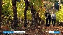 Lozère : replanter des vignes où elles avaient disparu