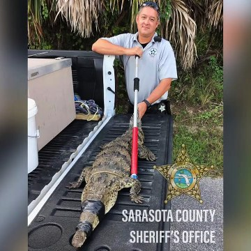 Rare American Crocodile Shows Up At Florida Resident Home