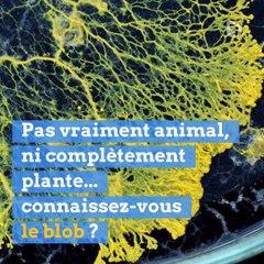 Le blob fait son entrée au parc zoologique de Paris