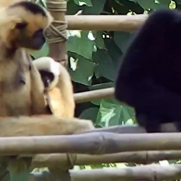 Free Stock Footage Animal Temple