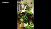"""British man shows off """"jungle home"""" filled with exotic plants"""