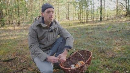 ازدياد شعبية جمع الفطر في الغابات