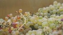 صناعة أفضل أنواع النبيذ وفقا للتقويم القمري