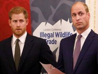 """Harry und William: Die Brüder sind """"auf unterschiedlichen Wegen"""""""