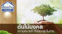 ต้นไม้มงคล ความหมายดี ที่นิยมปลูกไว้ในบ้าน