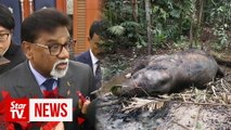 Xavier urges Sabah and Sarawak to amend laws to tackle wildlife crimes
