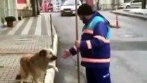 Este perro abandonado enseña sus trucos a un barrendero a cambio de cariño y se hace viral