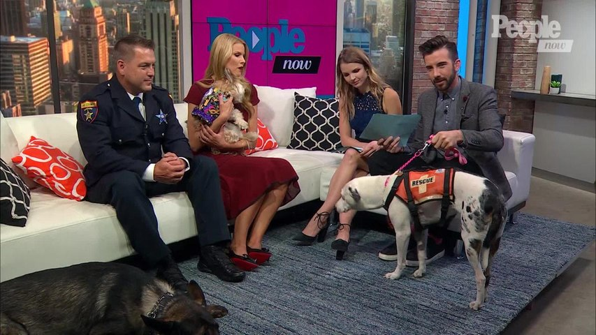 Beth Stern Shows Off These Amazing Pups That Will Be Featured on 'American Humane Hero Dog Awards'