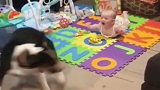 Ce chien est le meilleur babysitter !