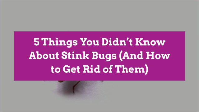 5 Things You Didn't Know About Stink Bugs (And How to Get Rid of Them)