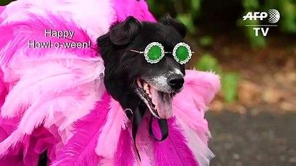 Rihanna and Greta Thunberg get the canine treatment at Halloween dog parade