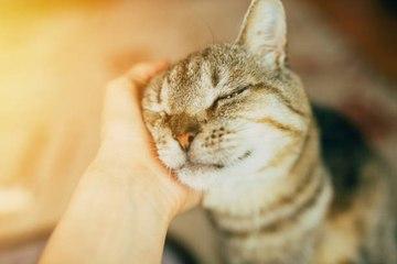 5 vorgefasste Ideen über die Dinge, die unsere Katzen glücklich machen