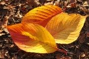 L'automne : la saison des coups de blues