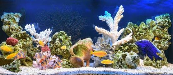 Ideas para decorar tu acuario