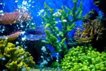 ¿Qué es el paisajismo acuático?